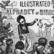 Illustrated Alphabet Of Birds