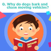 Why Dogs Bark at Cars?