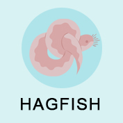 Hagfish Fun Facts