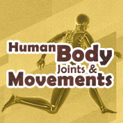 Human Body Joints and Movements
