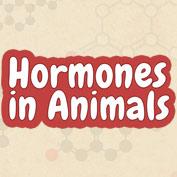 Hormones in Animals
