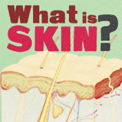 Structure and Function of the Skin