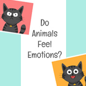 Do Animals Feel Emotions?